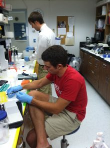 Photo of techs working in the lab